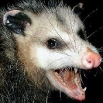 Profile picture of AngryOpossum